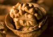 Ядките и особено орехите подобряват значително мъжката плодовитост