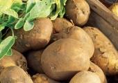 Картофите крият в себе си ефективно лекарство срещу язвата на стомаха
