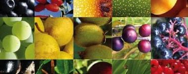 Мощта на антиоксидантите (Част първа)